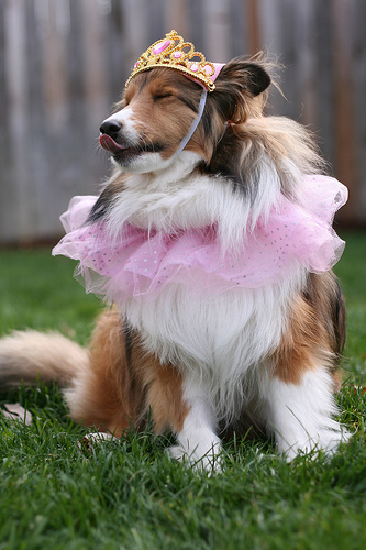 dog dressed in tutu and crown