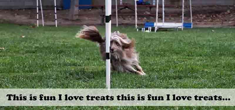 Hidden Benefit of High Value Dog Treats