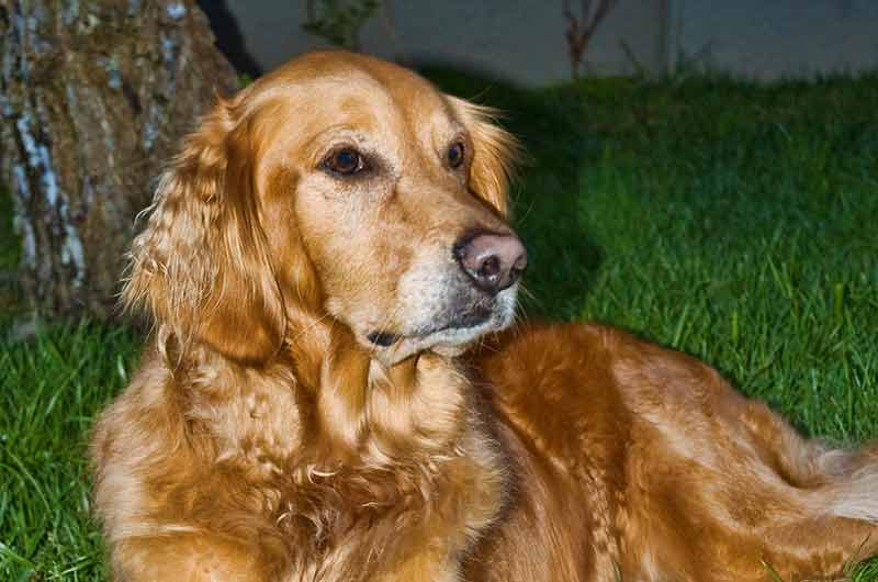 Doggy Behavior Fix – Getting my Two Dogs to Get Along (Part 4 of 7)